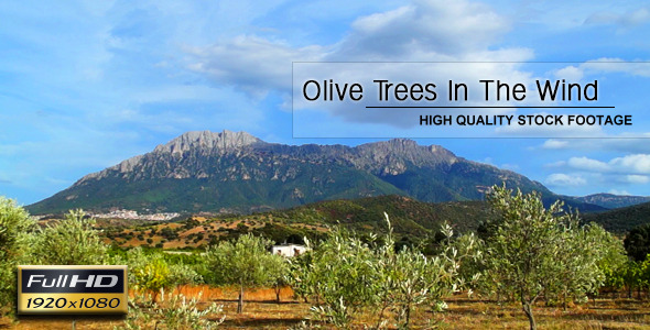VideoHive Olive Trees In The Wind 6840303
