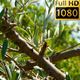 Olive Tree In The Wind 02 - VideoHive Item for Sale
