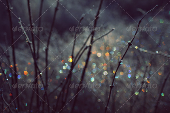 Winter Scene With Spectrum Light Bokeh In Grass - Stock Photo - Images