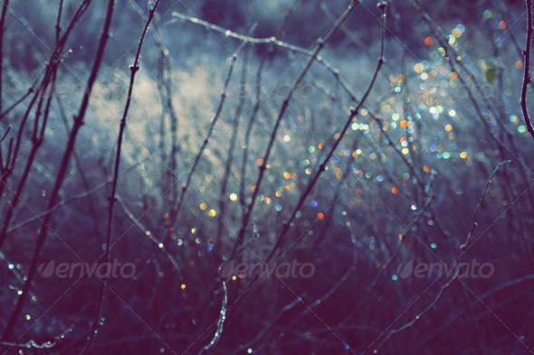 Winter Scene With Spectrum Light Bokeh - Stock Photo - Images