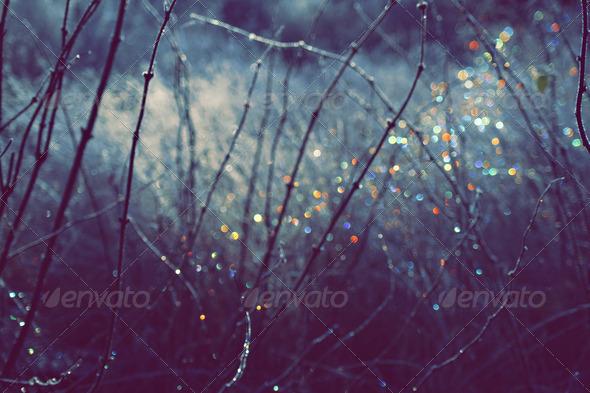 Winter Scene With Spectrum Light Bokeh - Stock Photo - Images