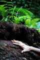 Hand on wet ground - PhotoDune Item for Sale