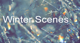Winter Lights Bokeh