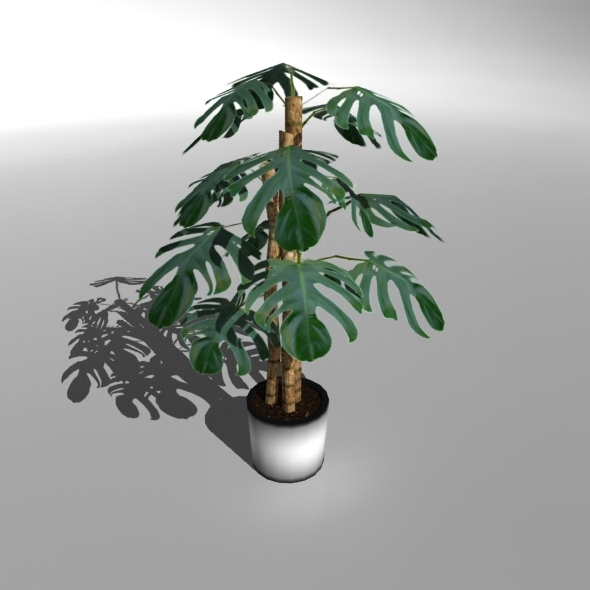 3DOcean Low-poly Plant Philodendron Deliciosa 6853270