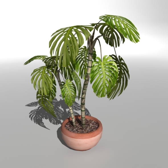 "Low-poly Plant ""Philodendron"" - 3DOcean Item for Sale"