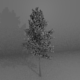 High-Poly Generic Tree