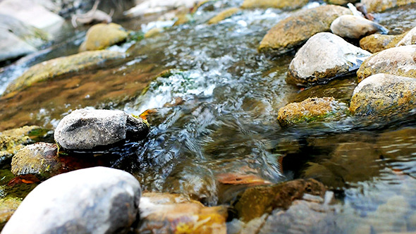 Stream Flowing Water 10