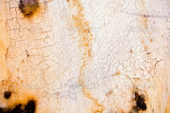 Gum Tree Bark - Stock Photo - Images