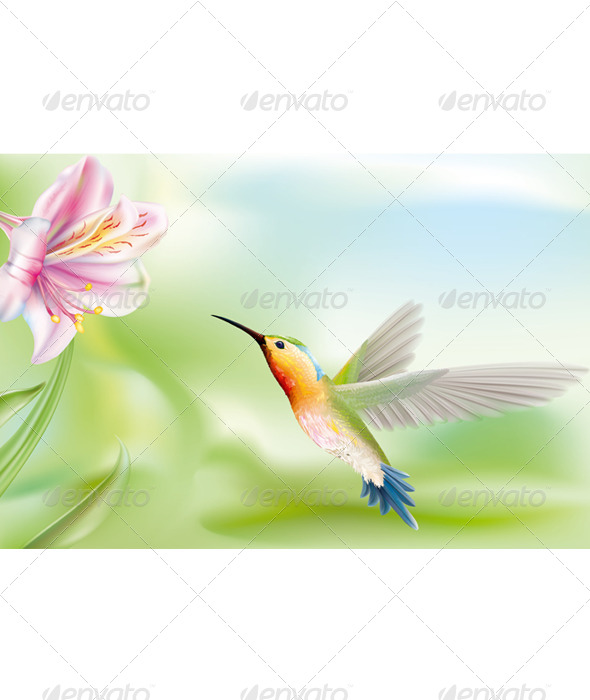GraphicRiver Hummingbird 6860126