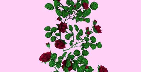 3DOcean Valentines Roses 6864303