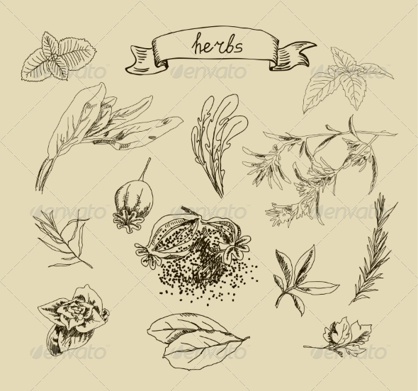 GraphicRiver Herb Sketches 6872416