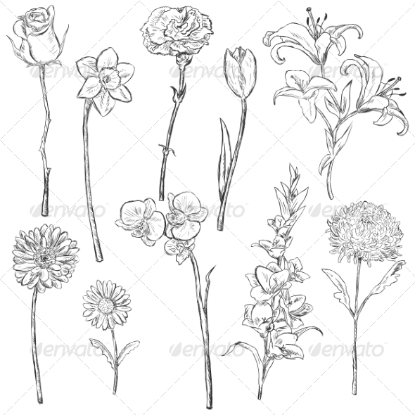 GraphicRiver Vector Set of Sketch Flowers 6874227