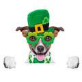 st patricks  day dog - PhotoDune Item for Sale