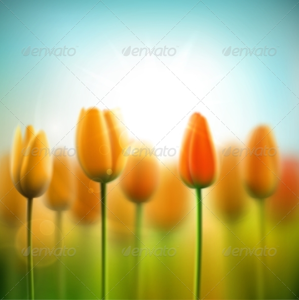 Spring Background with Tulips