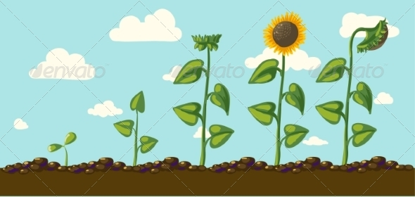 GraphicRiver Sunflower 6883453