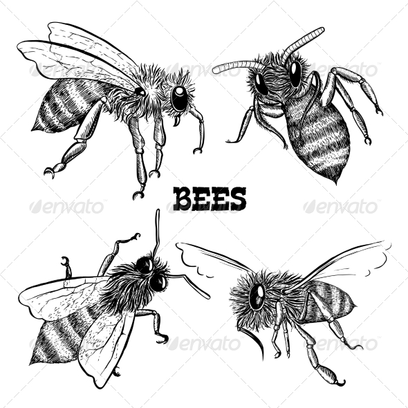 GraphicRiver Collections of Honey Bee Icons 6884483