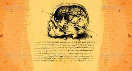 Anatomy art by Leonardo Da Vinci