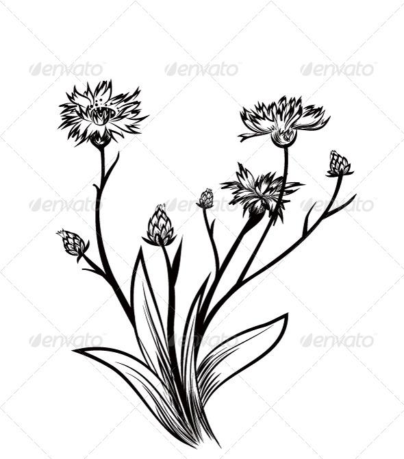 GraphicRiver Cornflower 6892190