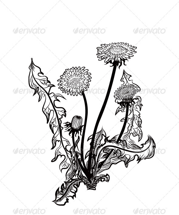 GraphicRiver Dandelion 6892200
