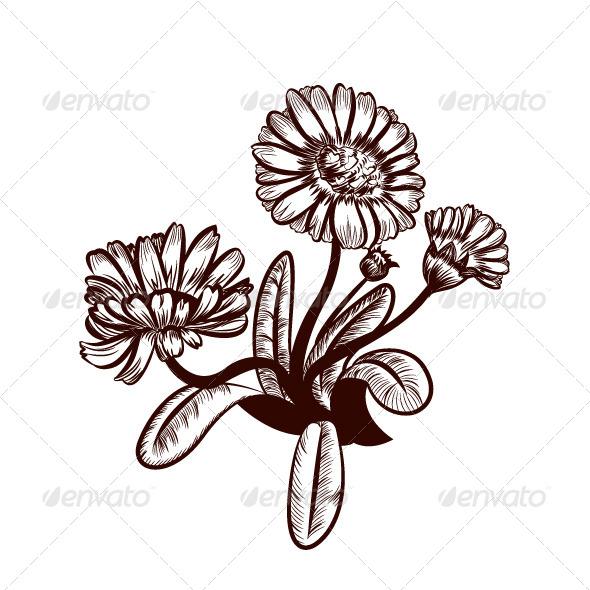GraphicRiver Marigold 6892203