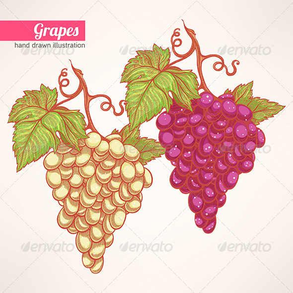 GraphicRiver Bunches of Grapes 6901948