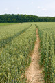 Technological tracks for crops processing on wheat field - PhotoDune Item for Sale