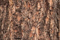 Pine Bark Texture - PhotoDune Item for Sale