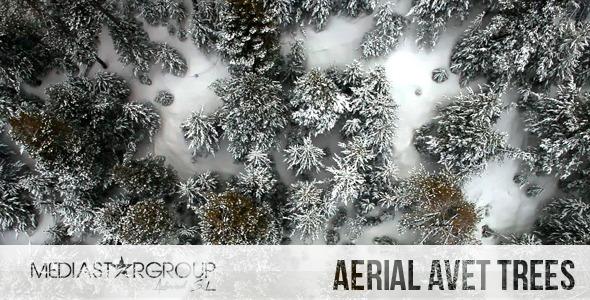 VideoHive Aerial Avet Trees 6859671