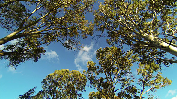 Looking up while Driving from Road with Trees