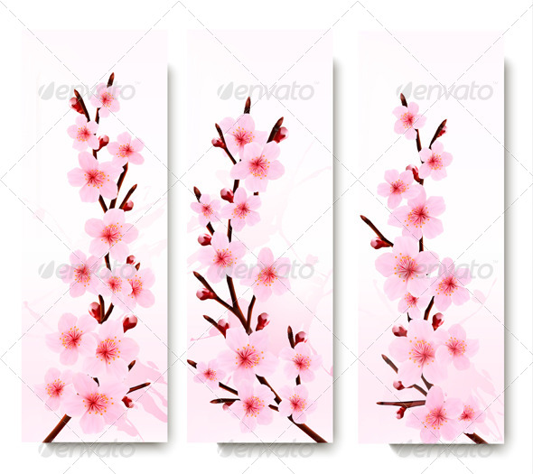 GraphicRiver Three Spring Banners with Blossoming Sakura Branch 6914656