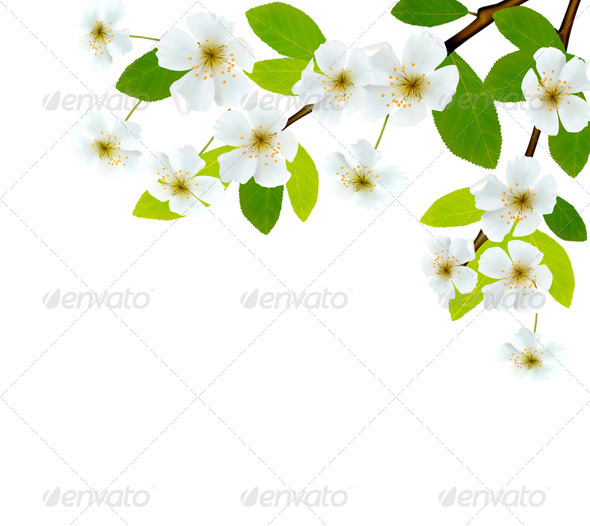 Nature Background with Blossoming Tree Brunch