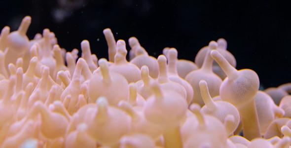 Corals 4