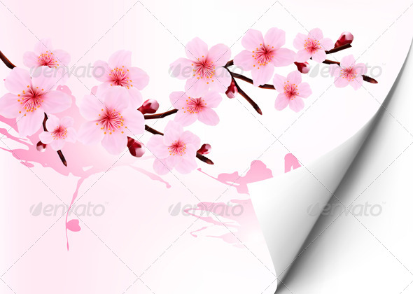 GraphicRiver Spring Background with a Blossoming Sakura Branch 6914620