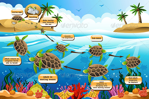 GraphicRiver Life Cycle of the Sea Turtle 6933563