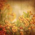 Rowanberry grunge background - PhotoDune Item for Sale