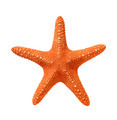 Red Seastar Isolated On White Background