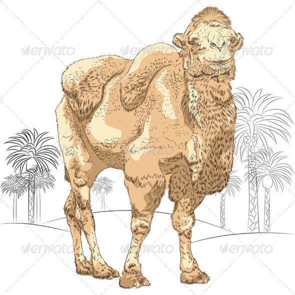 GraphicRiver Camel 6948859