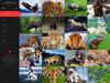 03_portfolio_4column.__thumbnail
