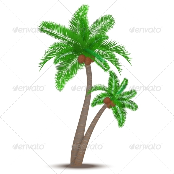 GraphicRiver Tropical Palm Tree with Coconuts 6958407