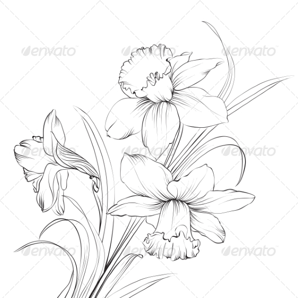 GraphicRiver Daffodil Flower 6961590