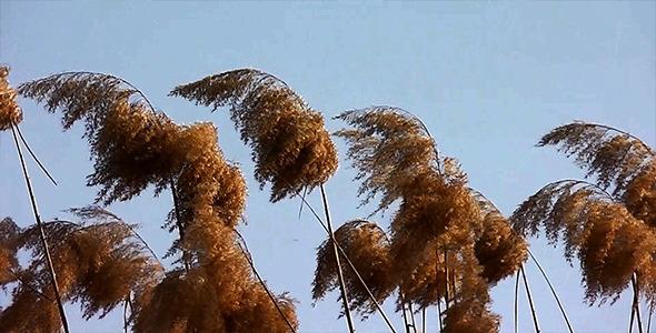 Reeds 4