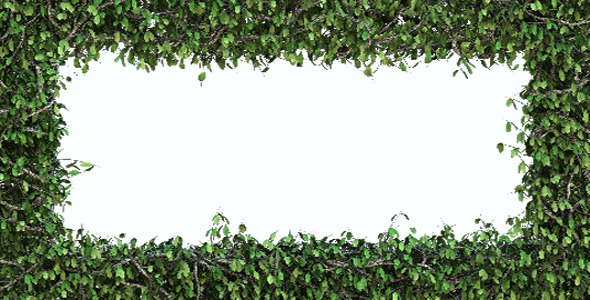 VideoHive Tree Frame With The Wind Blow 6884234