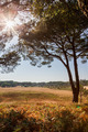 landscape view with pine trees - PhotoDune Item for Sale