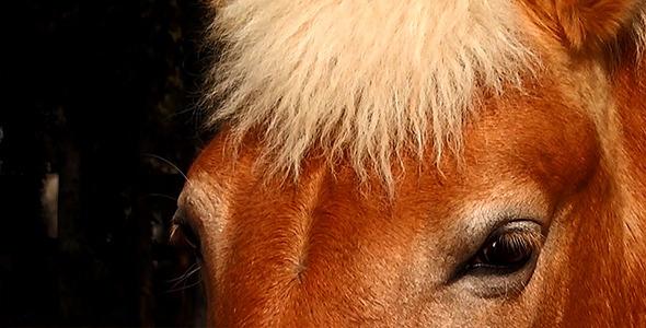 Eyes of Horse 2