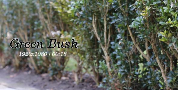 Green Bush 3