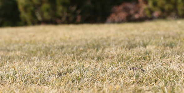 Brown Grass 2