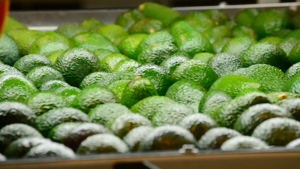 Avocados Industry Packaging Line