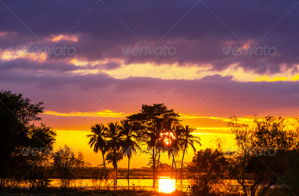 Flooded field - Stock Photo - Images