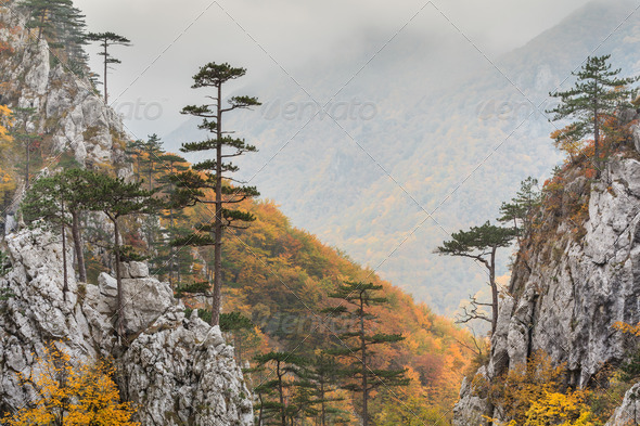 Tasnei Gorge, Romania - Stock Photo - Images