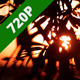 Branches And Sunset - VideoHive Item for Sale